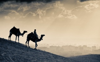 monochrome_camels_w1